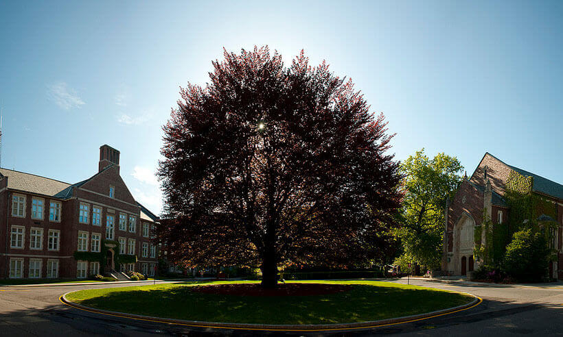 Tree in front of WPI's Admissions